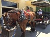 Sammy, our tour transportation