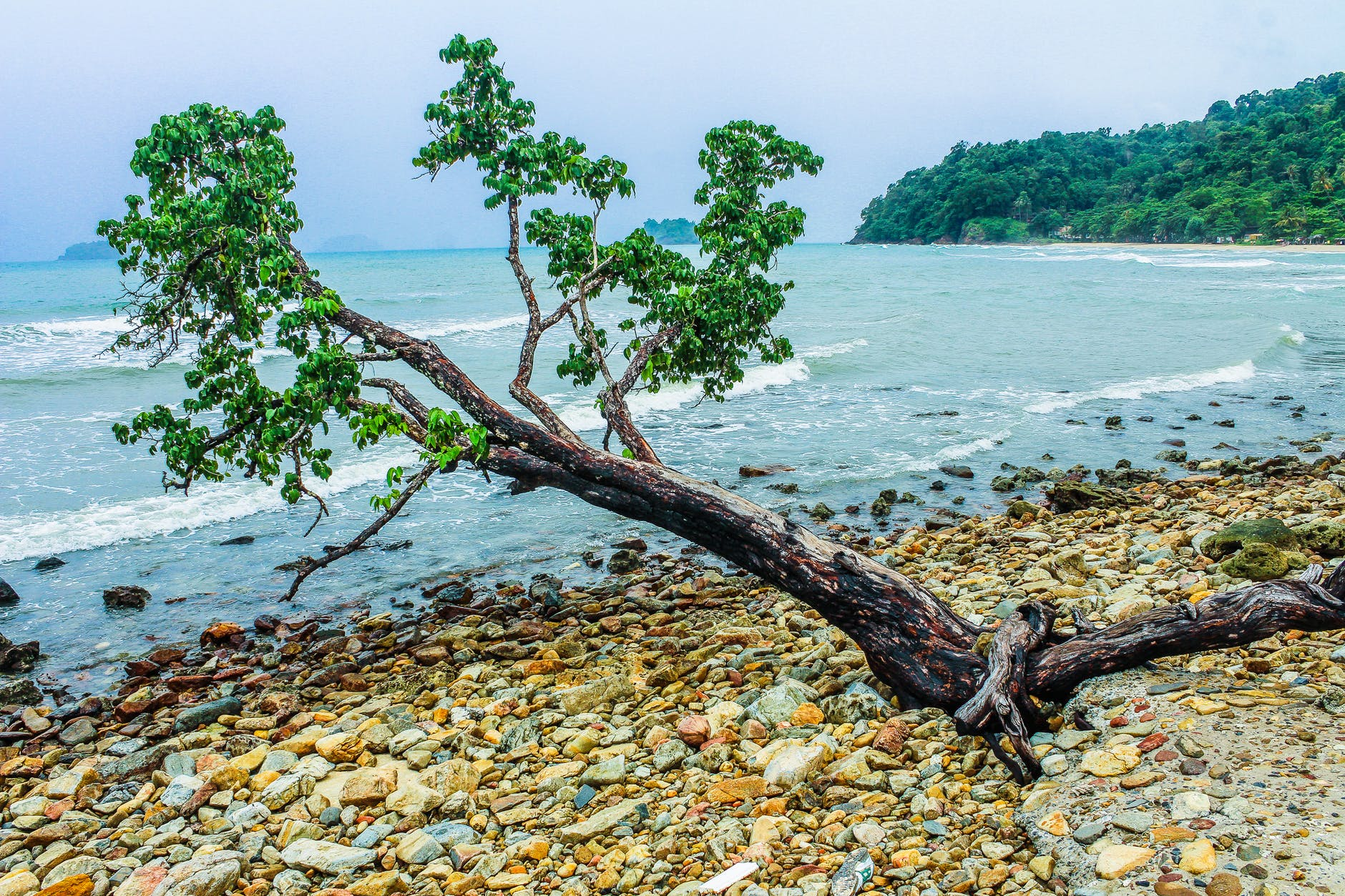 green tree beside seashore near green mountain
